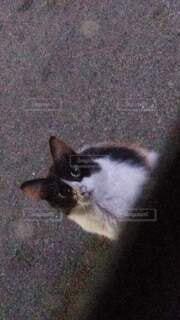 車に寄ってきた猫の写真・画像素材[4846104]