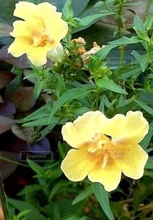 黄色の花の写真・画像素材[4918272]