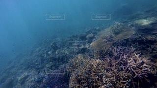 海の中の写真・画像素材[4872238]