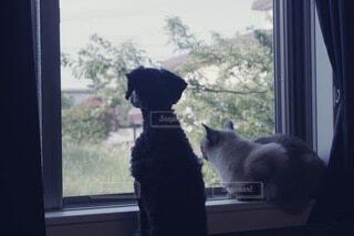 犬と猫の写真・画像素材[4845189]