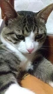 猫の写真・画像素材[4875176]