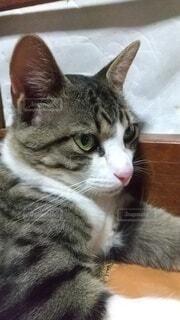 猫の写真・画像素材[4875175]