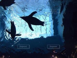 空飛ぶペンギンの写真・画像素材[4851285]