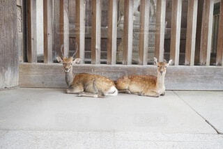何かを守っている鹿の夫婦の写真・画像素材[4851345]