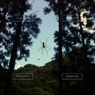 森の主の写真・画像素材[4857331]