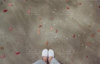 春と秋の写真・画像素材[4874801]