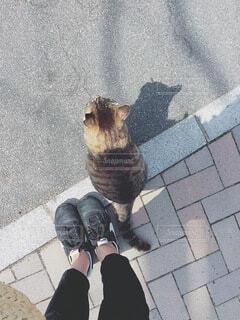 寄り添う野良猫の写真・画像素材[4875075]