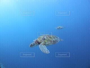 海中散歩の写真・画像素材[4852098]