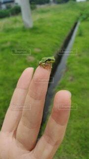 カエルと手の写真・画像素材[4850872]