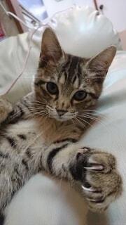 カメラ目線の子猫の写真・画像素材[4855257]