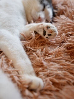 平和な猫の寝顔の写真・画像素材[4853423]