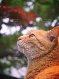 美しい横顔の猫の写真・画像素材[4877665]