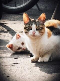 自転車置き場の母猫と仔猫の写真・画像素材[4877679]