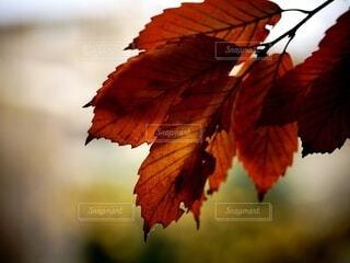 秋の色に染まる葉の写真・画像素材[4882598]