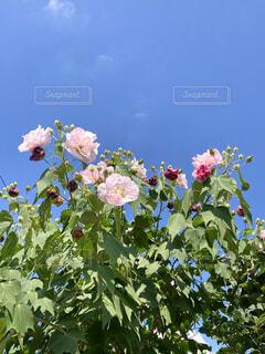 まだまだ咲くわよ〜な花達の写真・画像素材[4855851]