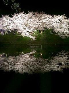 夜桜_2015_2の写真・画像素材[4856205]