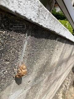 夏の始まりの写真・画像素材[4858673]