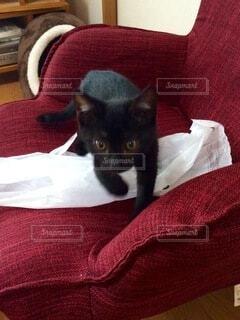 黒猫のタンたん🐈⬛2016の写真・画像素材[4895254]