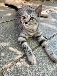 美猫さん_202110の写真・画像素材[4905894]