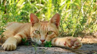 猫の写真・画像素材[4870353]