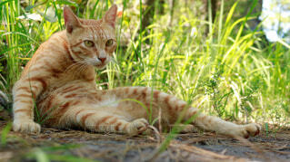 猫の写真・画像素材[4870363]