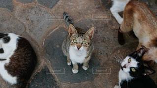 見つめる猫の写真・画像素材[4870415]