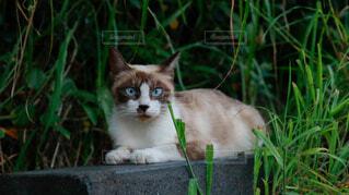 猫の写真・画像素材[4870442]