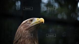 鷹 01の写真・画像素材[4876453]