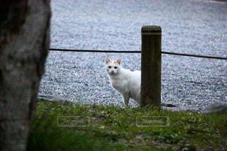 猫の写真・画像素材[219243]