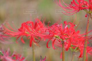 花の写真・画像素材[225115]