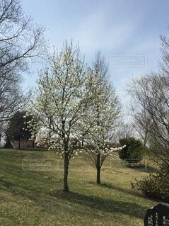畑の大きな木の写真・画像素材[4864511]