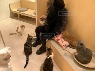 鏡の前に座ってカメラのポーズをとる猫の写真・画像素材[4873662]