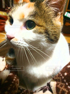 猫 - No.218644
