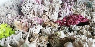 珊瑚礁5の写真・画像素材[4859635]
