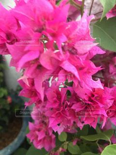 お花19の写真・画像素材[4879733]