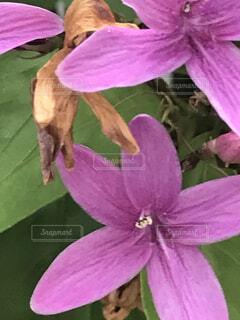 お花22の写真・画像素材[4879735]
