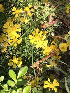 お花34の写真・画像素材[4883899]