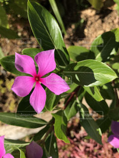 お花35の写真・画像素材[4883900]