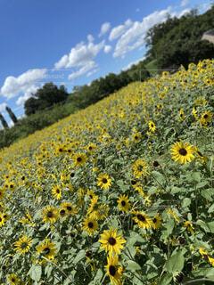 花のクローズアップの写真・画像素材[4875516]