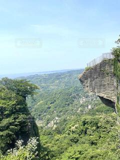背景に山のある木の写真・画像素材[4875592]