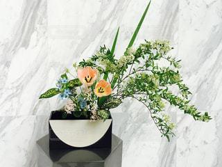 花の写真・画像素材[226008]