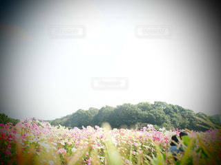 恋人の写真・画像素材[226015]