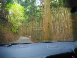 No.524014 森林