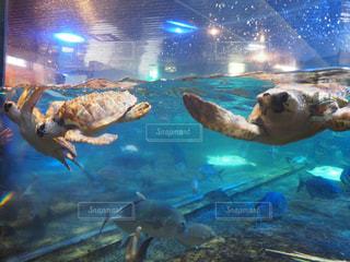 プールの水でカモメの群れの写真・画像素材[769709]