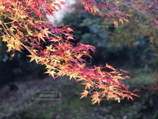 近くの木のアップの写真・画像素材[886798]