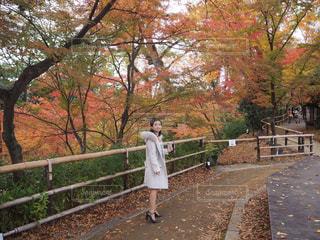 紅葉 - No.888200