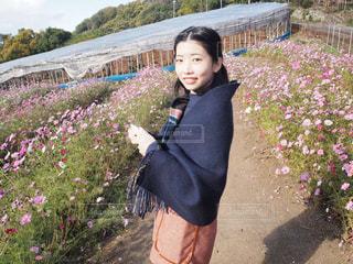 コスモス畑 - No.888246