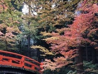 紅葉 - No.888250