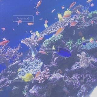 水族館の写真・画像素材[4868291]