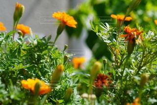 オレンジ色の花のクローズアップの写真・画像素材[4860404]